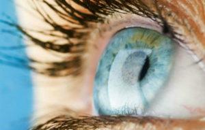 cornea parte del ojo