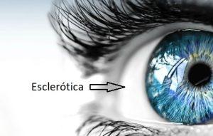 parte blanca del ojo esclerotica