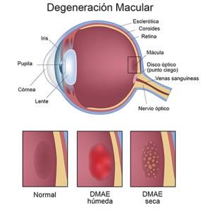 seccion_ojo_DMAE