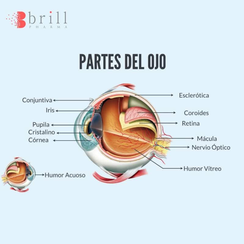 Partes del Ojo y sus Funciones