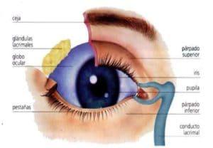 parte externa del ojo humano