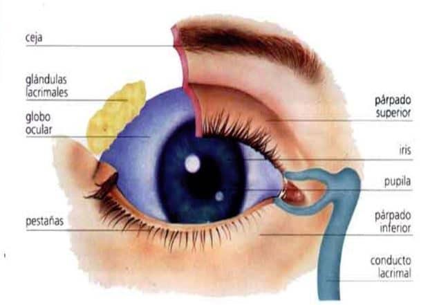 parte externa del ojo humano explicada por Dr. Ruiz Casas, oftalmólogo especialista en retina