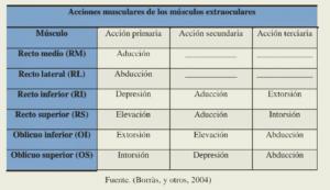 Diagrama de inserción en el limbo esclerocorneal