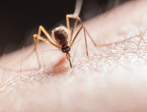 Qué hacer ante una picadura de mosquito en el ojo